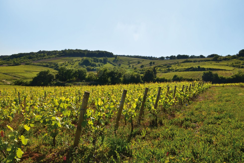 vitigo_paysage